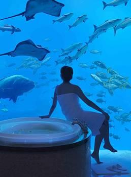 underwater hotel dubai 06 Atlantis: Dubais underwater hotel